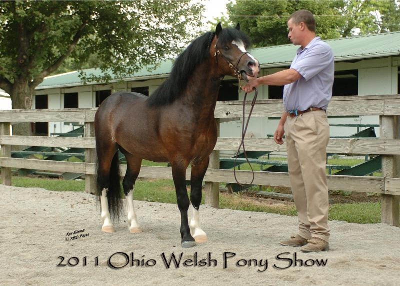 Ohio Welsh show 2011 with Mike Rees